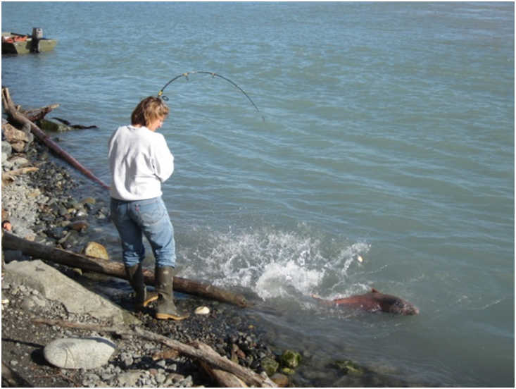 Fishing opportunities alaska department of fish and game for Kenai river fish counts