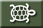 Image of a turtle
