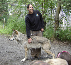 biggest wolf in the world - photo #36