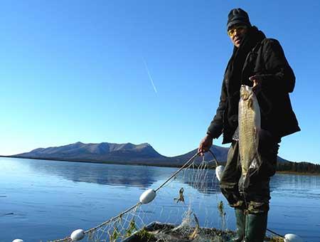 Subsistence on the kuskokwim alaska department of fish for Alaskan white fish