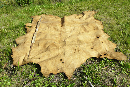 Turning A Moose Hide Into Buckskin Alaska Department Of Fish And Game