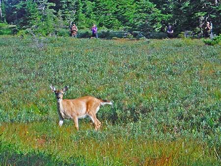 Prince William Sound Deer Research, Alaska Department of