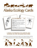 AWC Ecology Cards Cover