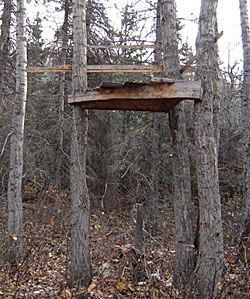 Building deer tree stands woodworktips for Deer hunting platforms