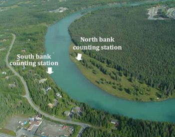 Kenai rm 19 site and river alaska fisheries sonar for Kenai river fish counts