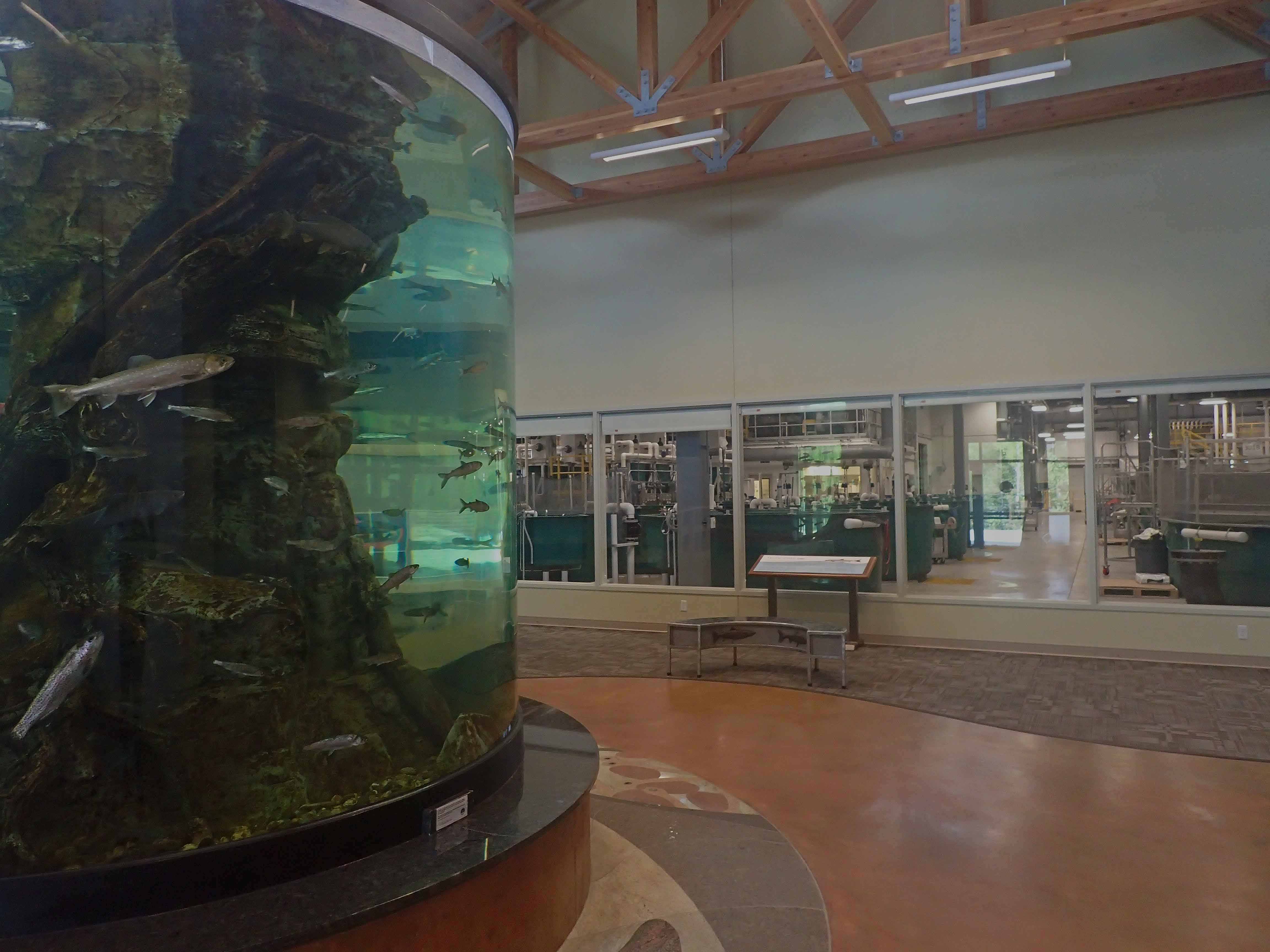 Tanana Valley Fisheries Center aquarium