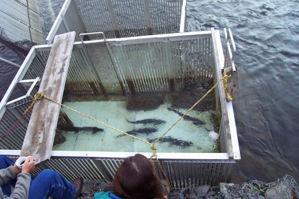 Research northern kenai peninsula management area for Kenai river fish counts
