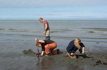 digging razor clams in Lower Cook Inlet
