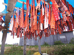 racks of subsistence caught salmon dry