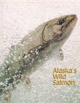 salmon wildlife