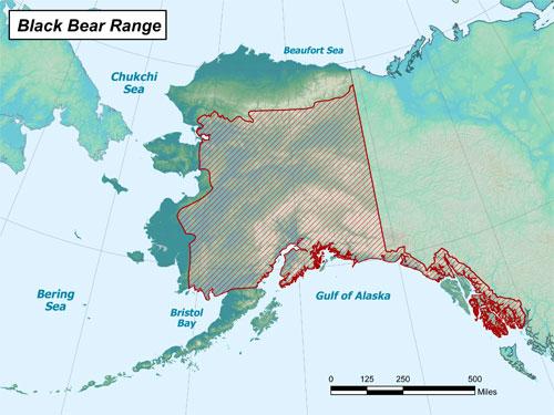 black bear range map
