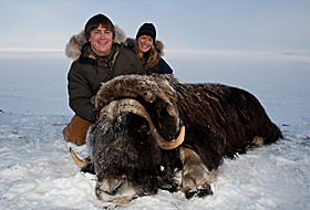 Hunting muskox in Alaska - image courtesy of the Alaska Department of Fish and Game