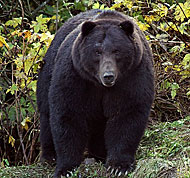 Photo of a bear.