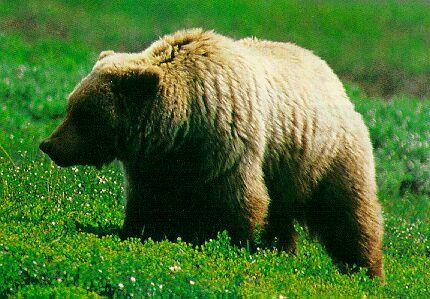 Photo of a bear