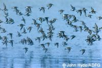 bird migration on the tundra