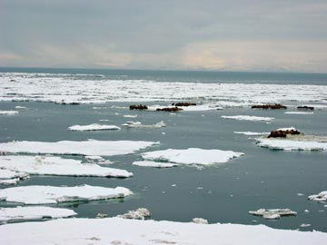 """Has NEVER happened in RECORDED history! - """"We've not seen this before"""" Seaice_resting"""