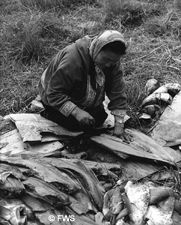 Subsistence fishing on the tundra