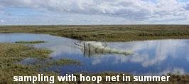 sampling with hoop net in summer