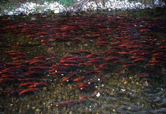 Alaska Dept Fish  Game on Fish Passage Improvement Program  Alaska Department Of Fish And Game