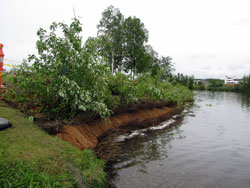Photo of a stream bank