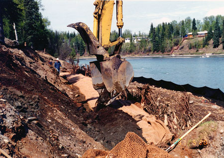 Game Fish  Parks on And Brush Layering Bank Stabilization  Centennial Park  Kenai River