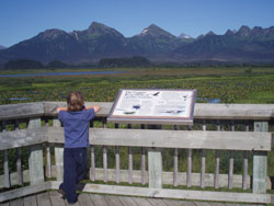 Wildlife viewing at copper river delta