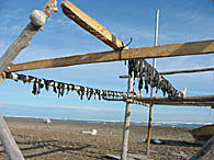 Seal meat drying