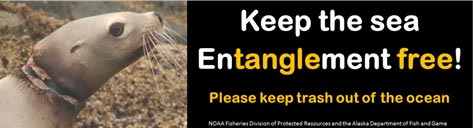 Keep the Sea Entanglement Free Bumper Sticker