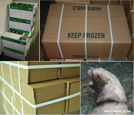Plastic packing bands on boxes collage