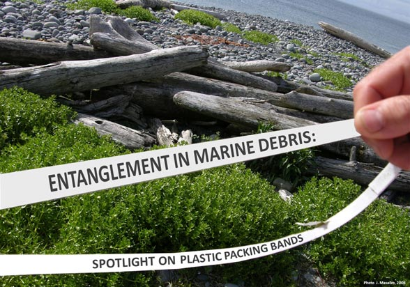 Entanglement in Marine Debris: Spotlight on Plastic Packing Bands