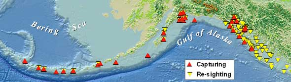 map of Steller sea lion work