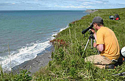 Researcher observing harbor seals on Tugidak Island