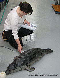 Woman taking an ultrasound on a seal