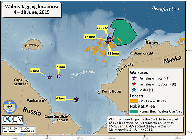 Walrus tagging locations in June 2015