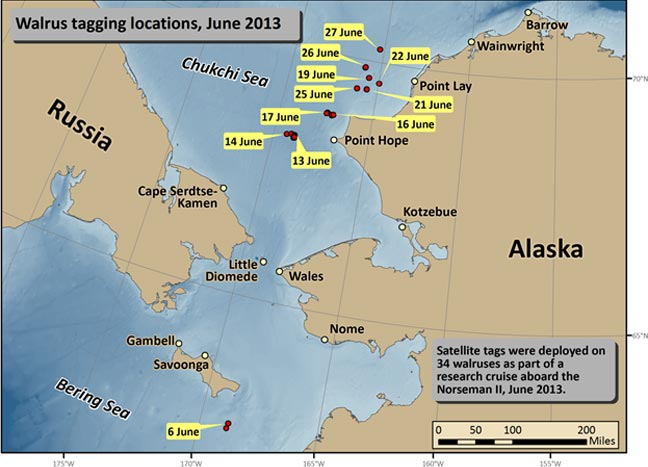 Walrus Tagging Locations June 2013