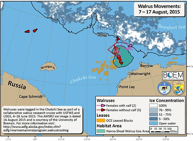 Requested Walrus Tracking Map