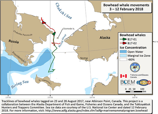 Map tracking bowhead whale movements between 02/03/2018 – 02/12/2018