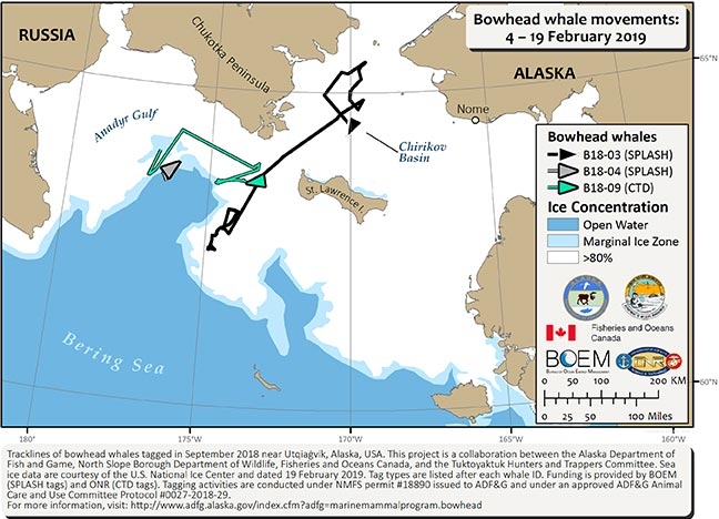 Bowhead Whale Satellite Tracking, Alaska Department Of