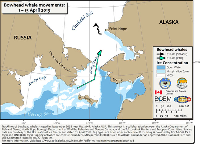 Map tracking bowhead whale movements between 04/01/2019 – 04/15/2019