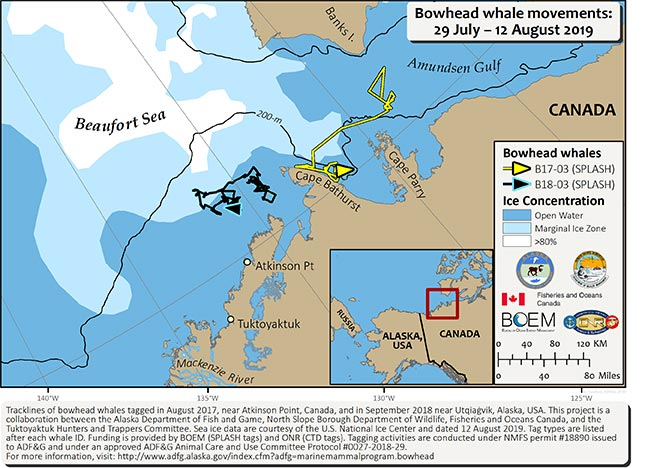 Map tracking bowhead whale movements between 07/29/2019 – 08/12/2019