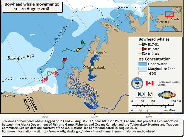 Map tracking bowhead whale movements between 08/11/2018 – 08/20/2018