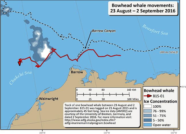 Map tracking bowhead whale movements between 08/23/2016 – 09/02/2016
