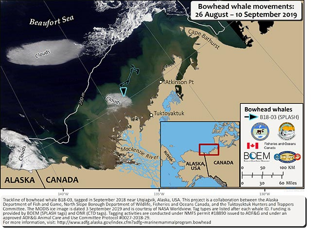 Map tracking bowhead whale movements between 08/26/2019 – 09/10/2019
