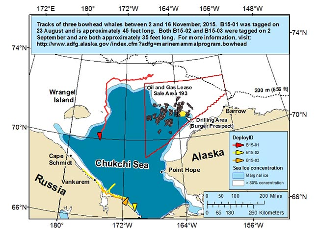 Map tracking bowhead whale movements between 11/02/2015 – 11/16/2015