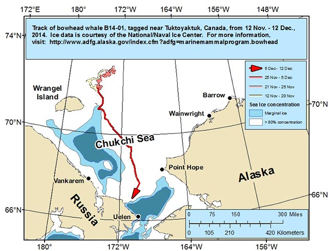 Map tracking bowhead whale movements between 11/12/2014 – 12/12/2014