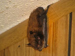 bat in building