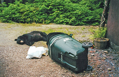 Coexisting with Bears Managing Bear Attractants : coleman kenai tent - memphite.com