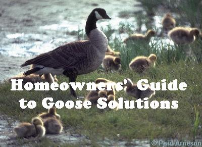Homeowners' Guide to Goose Solutions
