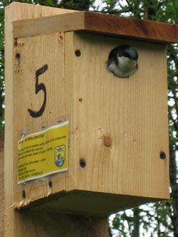 A Guide To Building And Placing Birdhouses Building Tips