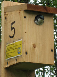 Swallow in birdhouse
